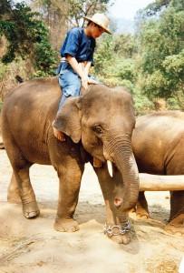 Elefanti di Chiang Mai